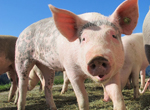 benessere animale e sanità